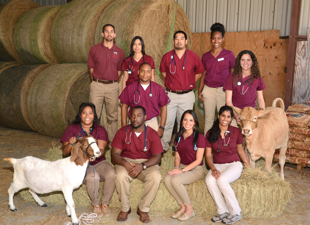 Veterinary Medicine | Tuskegee University